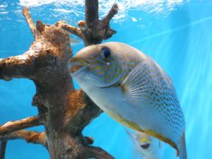 可愛い表情の魚